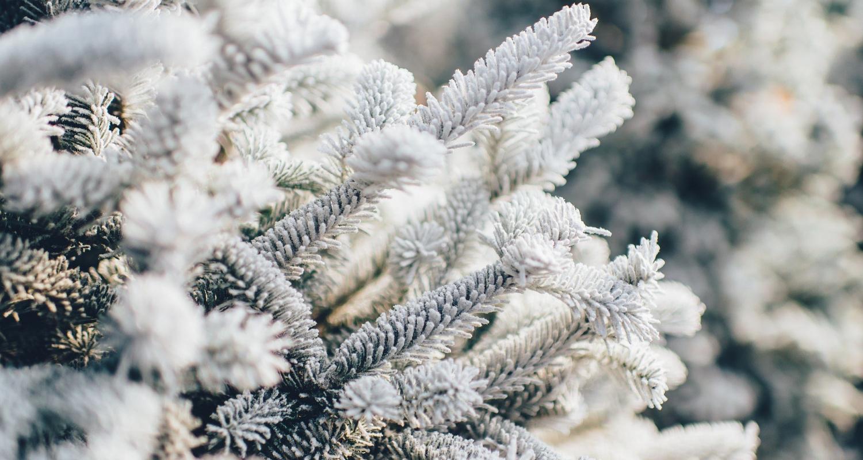 Frosty 1081851 1920