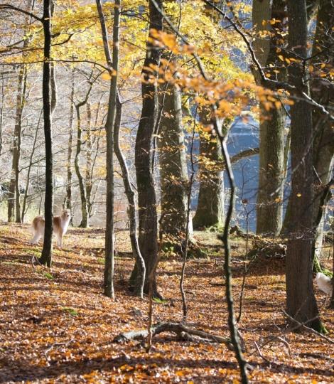 Autumn 3947732 1920