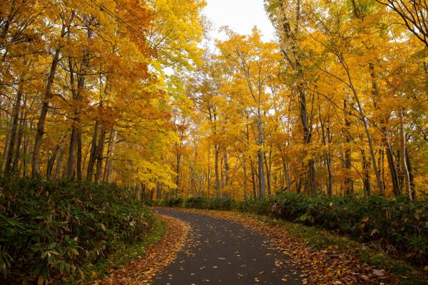 Autumn hangetsu