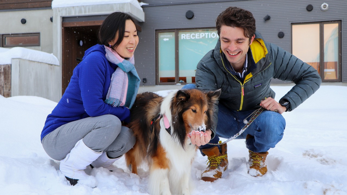 Snowdog village 50760695063 o